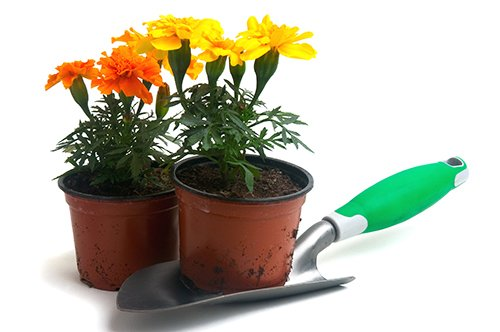 Yellow and orange flowers are planted in pots with a single shovel.